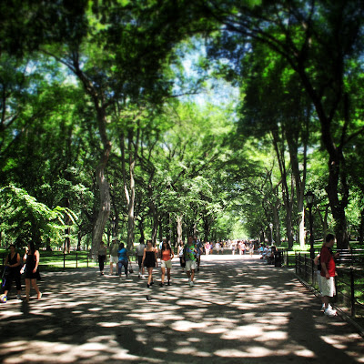 Stroll the tree-lined avenues of Central Park in New York during summer