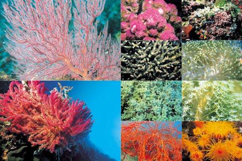 Arrecifes y corales en el fondo del mar (10 fotos de 800x600)