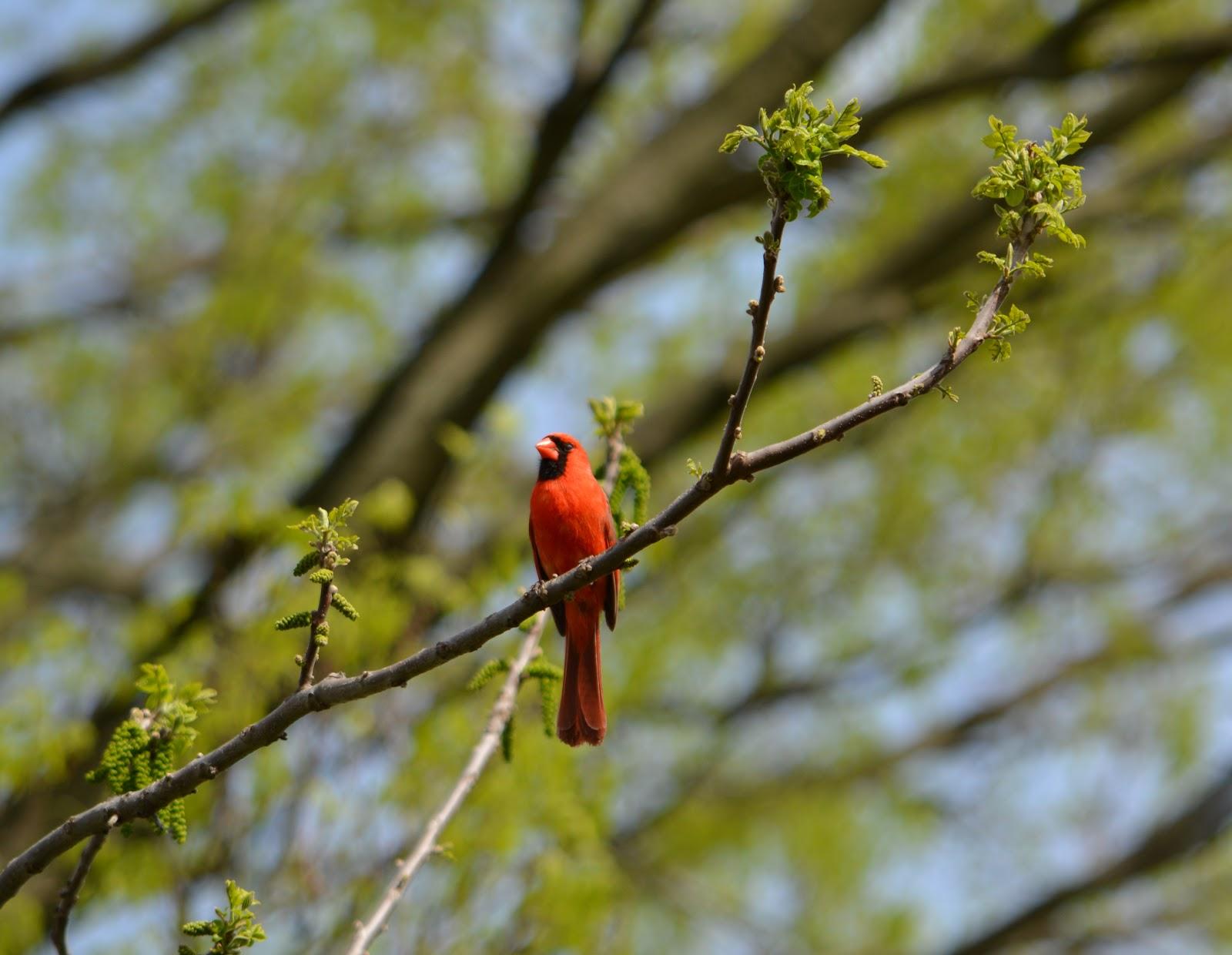 cozy birdhouse | cardinal
