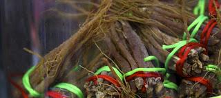 Αντιγηραντικά βότανα,Τζίνσενγκ