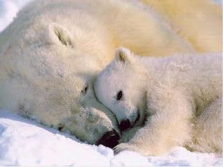 foto beruang - gambar hewan