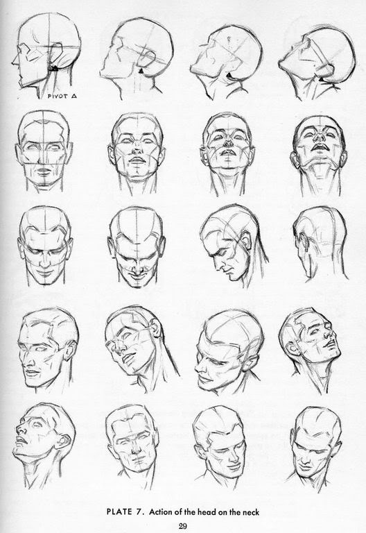 Force Character Design From Life Drawing Download : Animopus head prespective reference