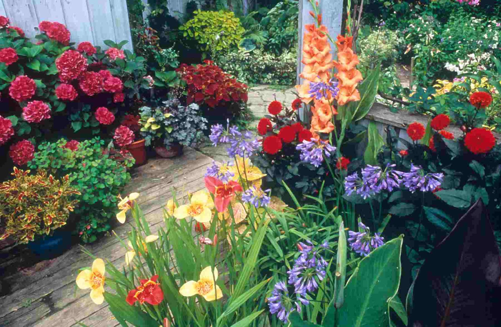 Home small potted gardens ideas new home designs for Small flower garden designs