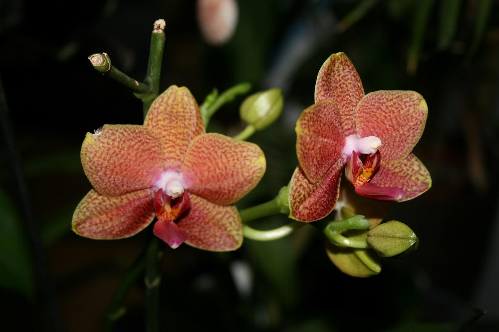 junglejane seramis orchideen substrat. Black Bedroom Furniture Sets. Home Design Ideas