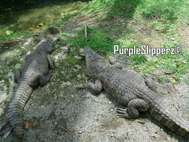 NPC Natures Park Iligan City
