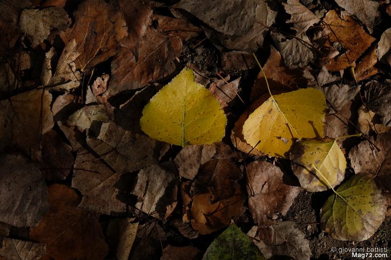 Fotografia di foglie cadute a terra