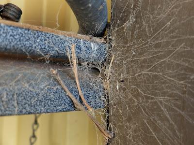 Kukulcania arizonica webs