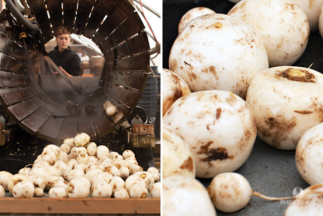 white_turnips_washing_station_farm_photography_vegetables_new_york_photographer by sarah parisi for this beautiful life