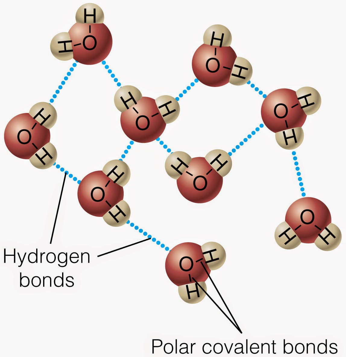 hydrogen bond Hydrogen bonds are intermolecular forces between molecules they form because one atom has a high electronegativity, so it gets a partial negative charge, and the hydrogen gets a partial positive.