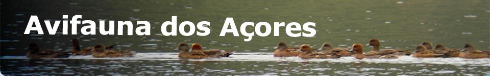 Avifauna dos Açores