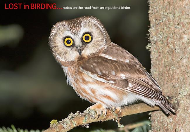 Lost in Birding