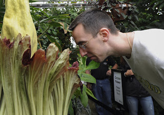 Stinky corpse flower blooms again at Ohio State