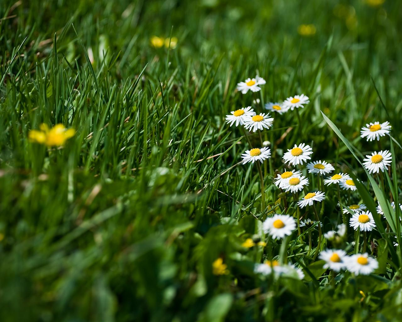 http://2.bp.blogspot.com/-dR14Z4pjMbg/TmTAZI4VqHI/AAAAAAAAAeE/NWtY0dH795w/s1600/Wallpapers-room_com___spring_calling_wp_by_jokla_1280x1024.jpg