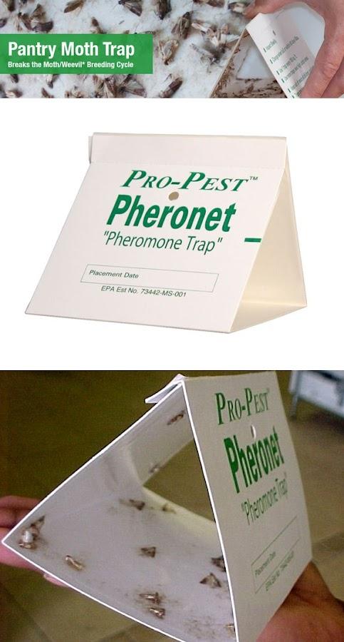 Pantry Moth Pheromone Traps