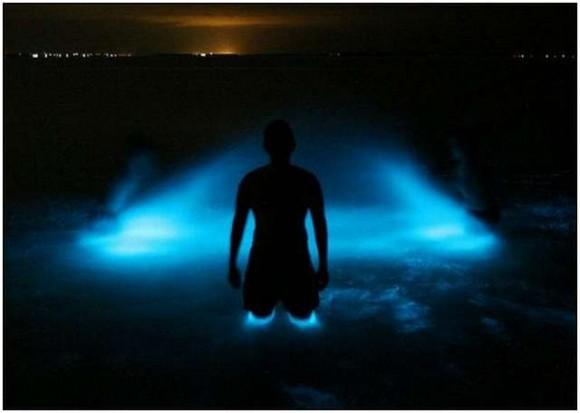 عندما تتلألأ الشواطىء كالنجوم  Bioluminescent-Lake-in-Australia-6-580x413