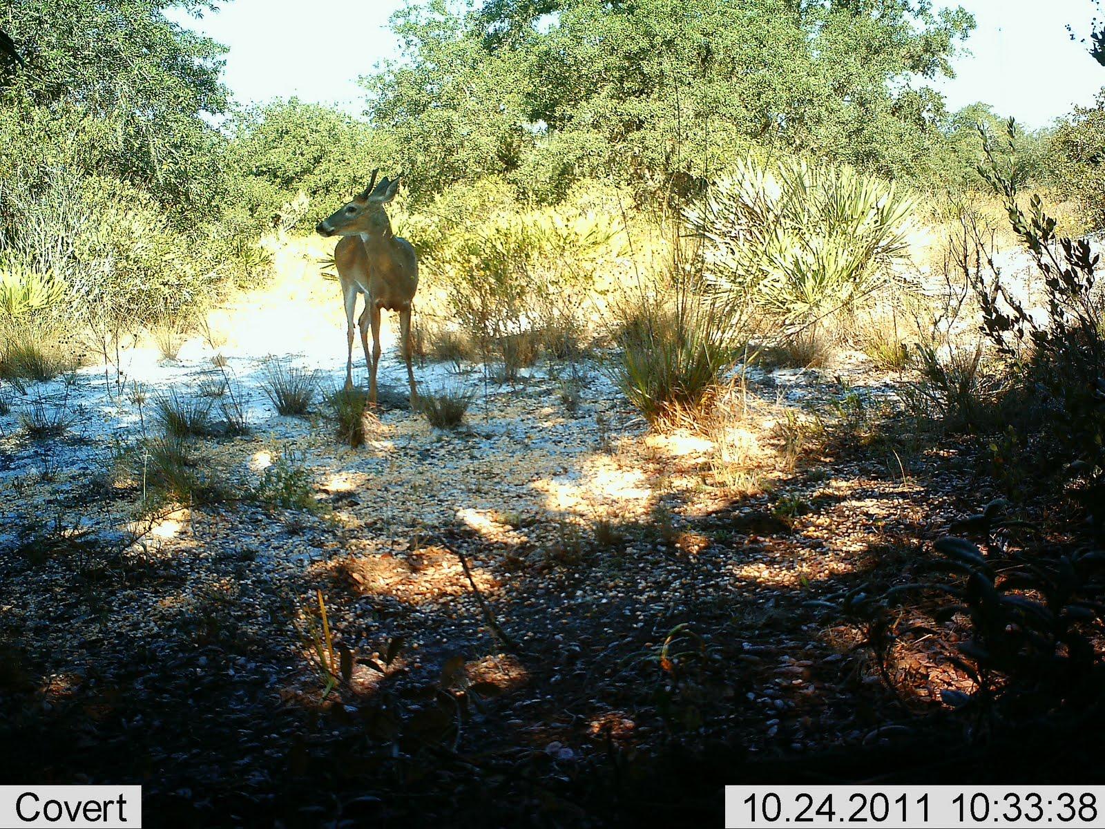 feeder feeders deer protein buck forum index boss jpg img hunter