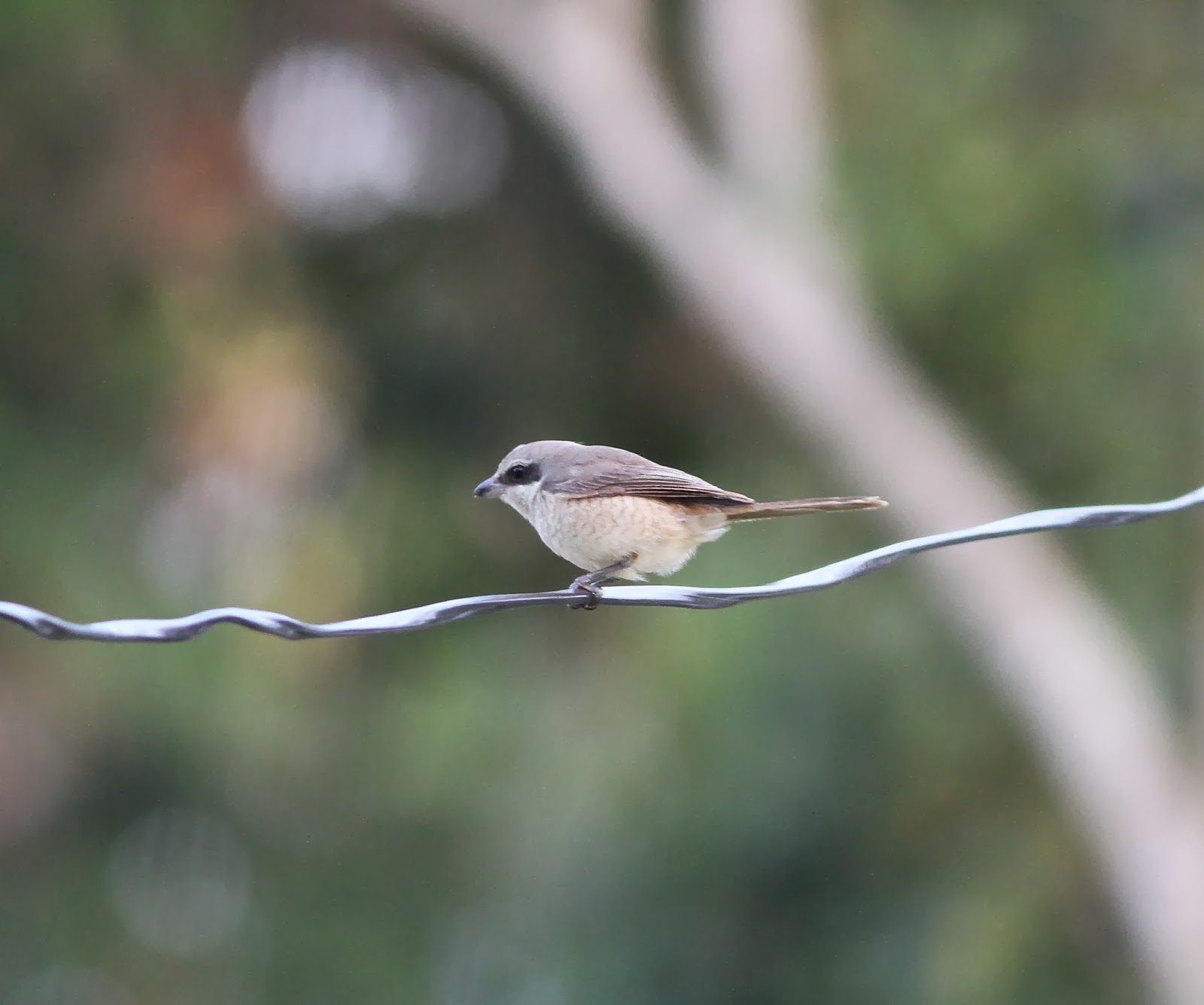 Birding Poole Harbour & Beyond: 21 Dec 13 - A Big Day for Indian ...