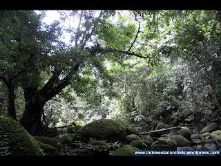Habitat Anggrek Spesies dan tumbuhan Paku