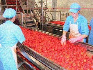 A Sorgatto Alimentos Ltda investirá cerca de R$  14 milhões em sua fábrica na cidade de Cristalina