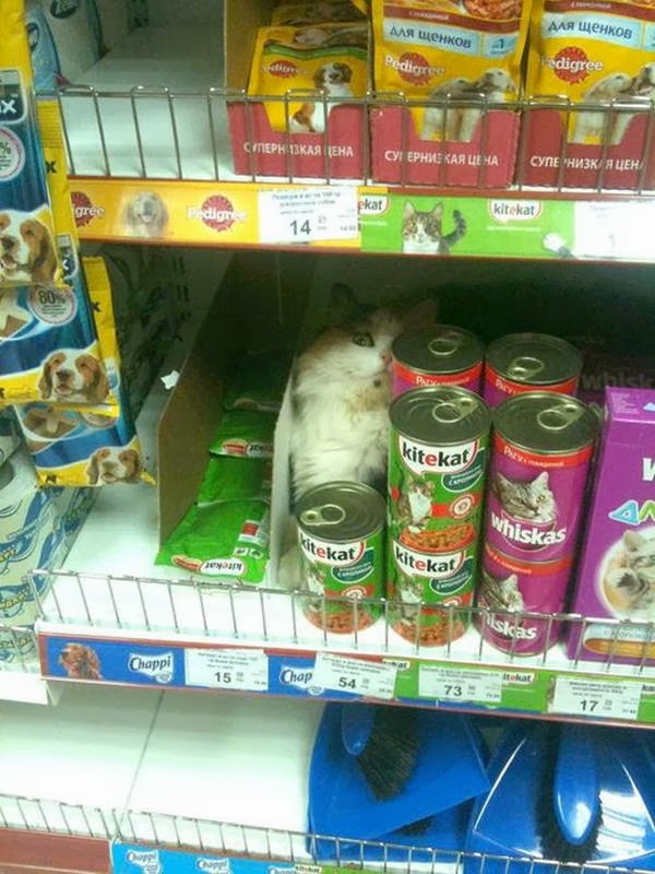 Funny cats - part 90 (40 pics + 10 gifs), cat sits inside food cat section in a store
