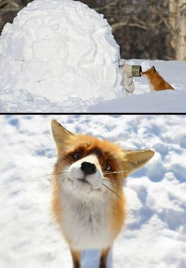Funny animals of the week - 29 May 2015, best animal photos, funny animal photo, animal pictures