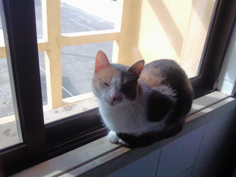 A minha gata Pandora