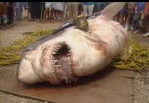 International Fishing News Usa The Biggest Shark Ever