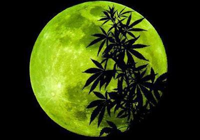 marihuana a la luz de la luna