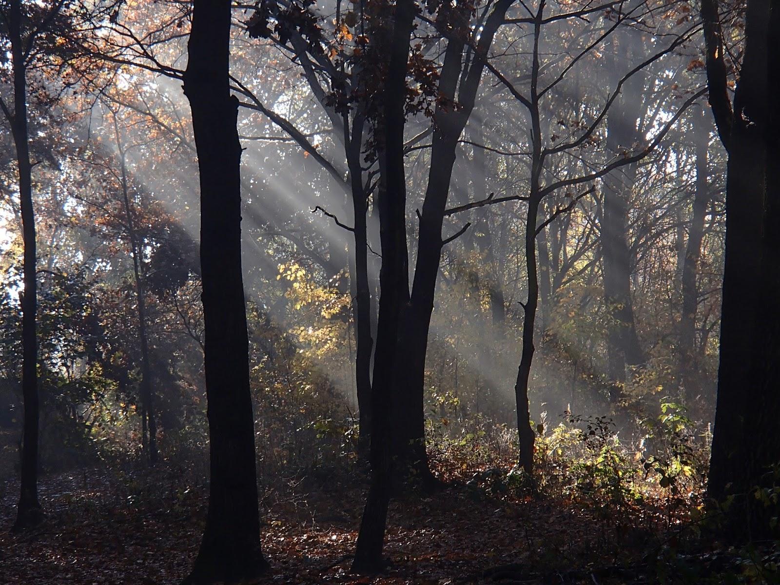 Jesień, jesienny las