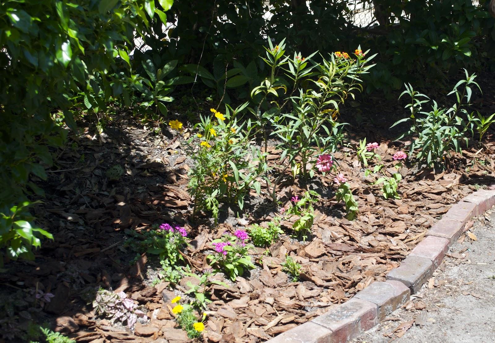 milkweed gardens