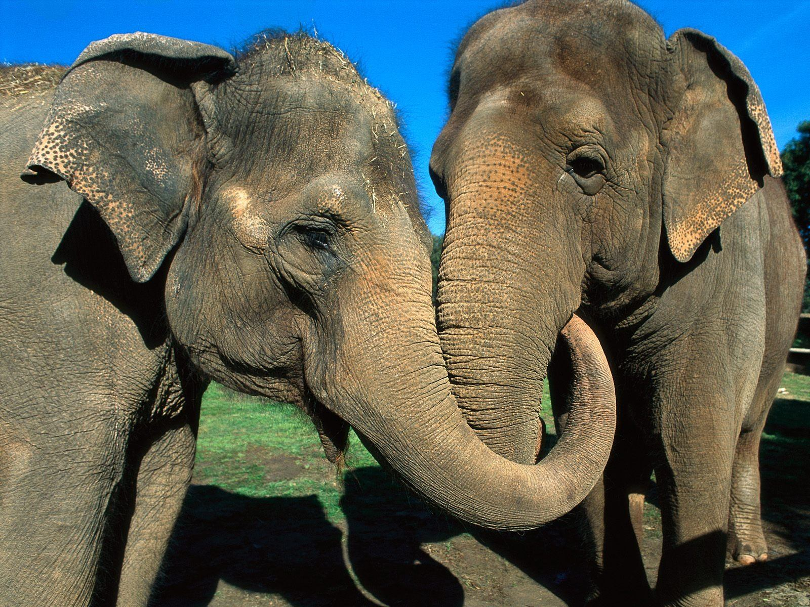 different types elepha...