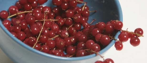 acido urico ggt alimentos que no se pueden comer por el acido urico que alimentos aumentan el acido urico