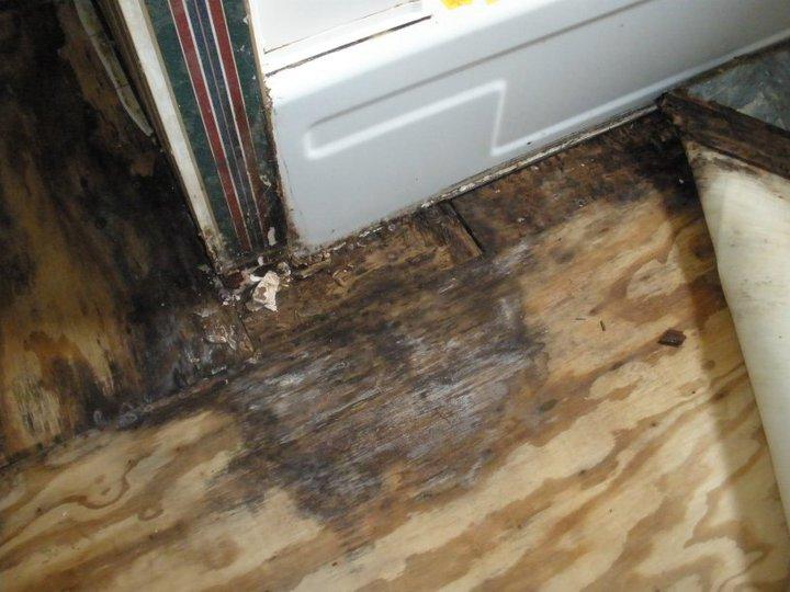 Bathroom floor dry rot : The mess we call home bathroom diaries