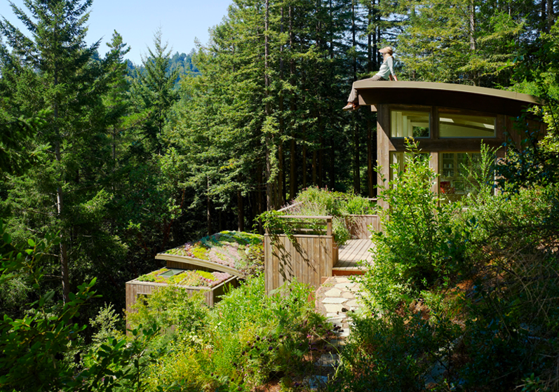 Twiggy and lou mill valley cabins by feldman architecture for Mill valley cabins