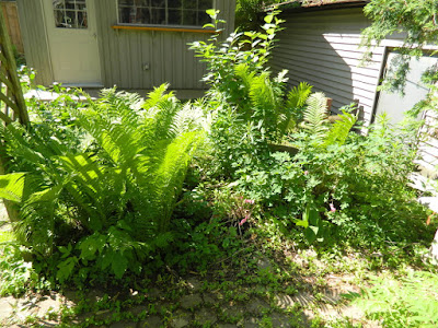 Mount Pleasant West back garden clean up before Paul Jung Gardening Services Toronto