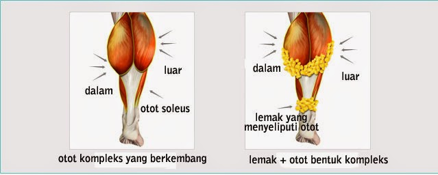 Otot berkembang seperti otot atlit