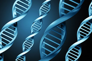 Uncomplicated The Dna Test Reviewer Advice In The Usa