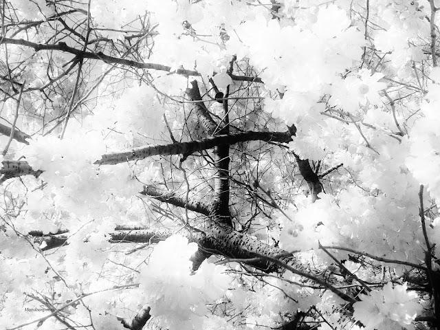 L'espace d'un feuillage Photo Brigitte Maillard