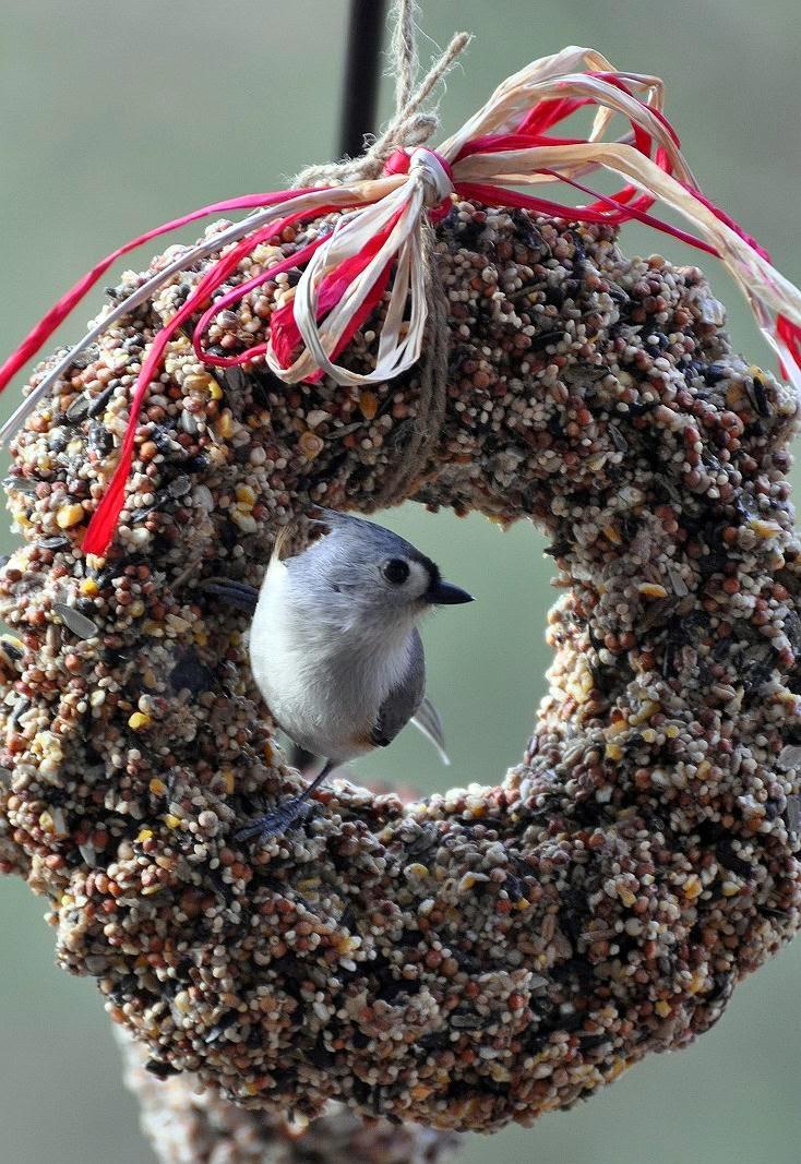 The garden roof coop diy birdseed wreaths tufted titmouse solutioingenieria Gallery