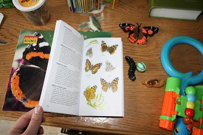 pre-k butterfly unit first field guide