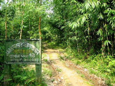 Madhupur Forest