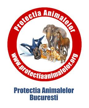 Protectia Animalelor Bucuresti