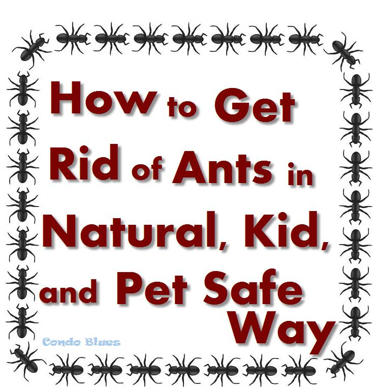 Condo Blues: How to get Rid of Ants in a Pet and Kid Safe Natural Way