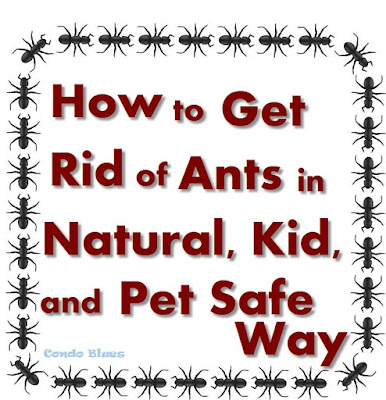 Natural Way To Stop Ants From Coming In The House