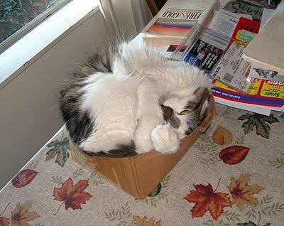 gato+dormido Imagenes de animales Divertidos