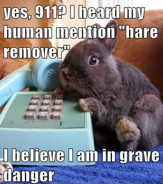 Watch What You Say Around Your Bunny!