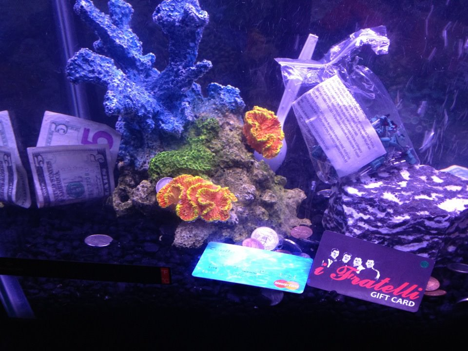 Durbin Diary: V... Very Interesting Fish Tank Decorations