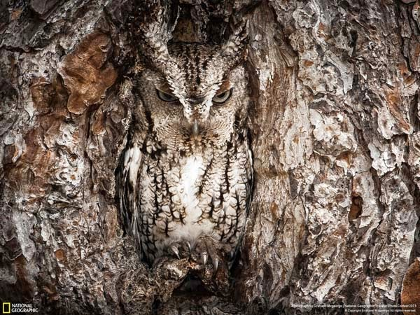 3.) A great horned owl gives a warning - 12 Photos That Prove Nature is Awesome