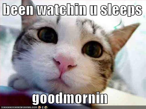 Funny Good Morning Cat