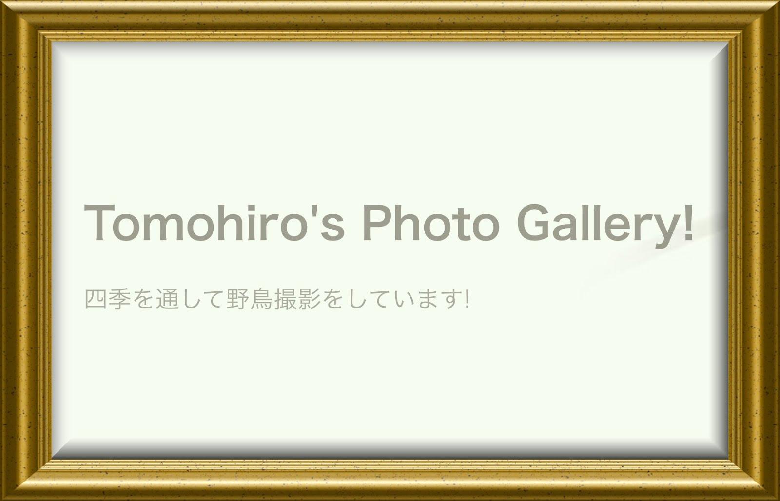 Tomohiro's Photo Gallry!